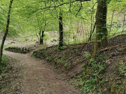 2 Grundstücke zusammen ca. 1740qm Pfälzer Wald Kapitalanlage/Freizeit-Nutzfläche