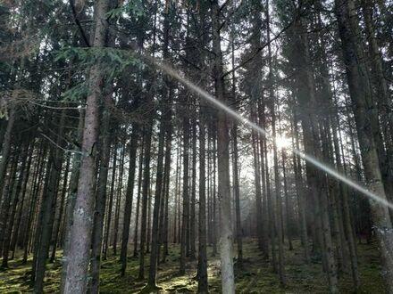 Wald 1,46 ha Gemarkung Geslau