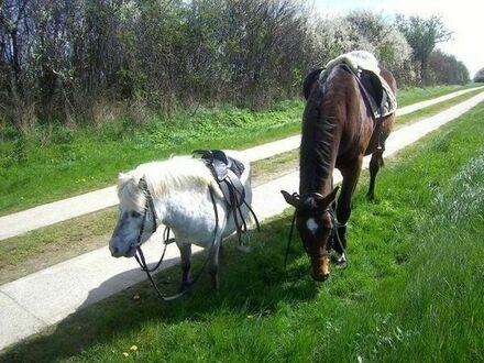 Großes Bauernhaus für Pferde Haltung geeignet