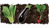 Im Gemüsebeet: Sechs Tipps für eine gelungene Ernte