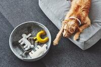 Designermöbel für  Haustiere