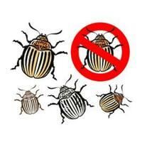 Rechtstipp: Welche Ansprüche gelten bei Schädlingsbefall?