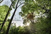 Zufluchtsort in den Baumwipfeln
