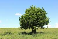Welcher Baum passt in den eigenen Garten?