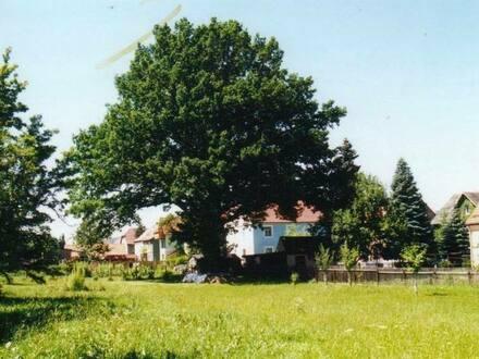 Großschönau - Tolles Grundstück zum Bauen für 16 Euro/m² mit altem Baumbestand
