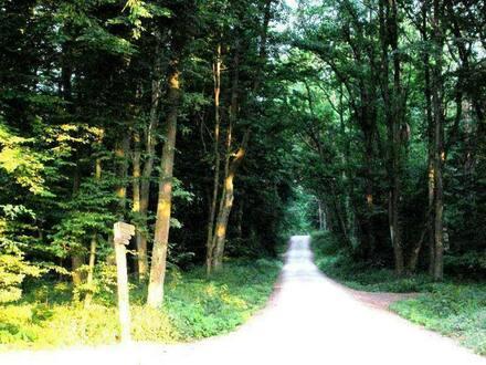 Bamberg - Im Berggebiet : Akttraktive 3,5 Zimmer Wohnung, in der Nähe Natur pur nicht weit zum Bruderwald.