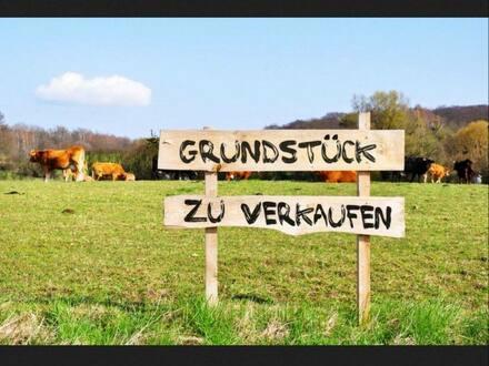 Elmstein - provisonsfreies Baugrundstück vollerschlossen