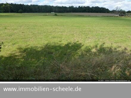 Uelzen OT Molzen - 44.937 Quadratmeter Grünland mit Bachlauf