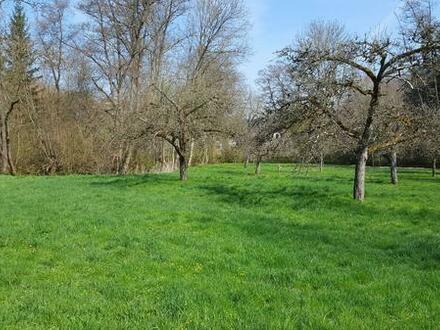 Verpachte Freizeitgrundstück/ Obstbaumwiese/ Wiese am Bachlauf in Waldnähe