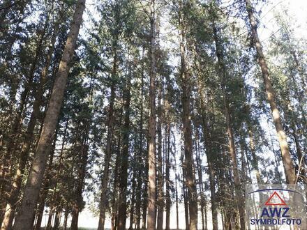 SCHÖNER Wald in LINZ-Lichtenberg, ca. 4,2 Hektar!
