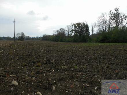 Verkaufe landwirtschaftliches Grundstück
