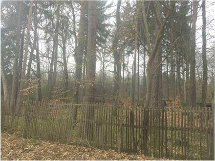 REMAX - Grundstück mit Baumbestand und kleiner Hütte