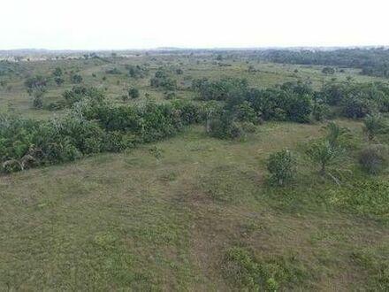 Brasilien 400 Ha Grundstück mit diversen Pflanzungen AM