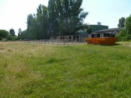 landwirtschaftliches Grundstück in Lu-Oggersheim - genutzt zur Pferdehaltung