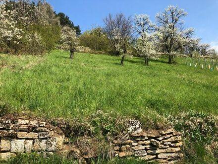 Baumwiesengrundstück