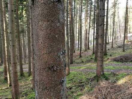 Waldgrundstück, Forst, Wald