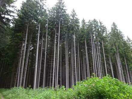 Fichtenwald in der Gemarkung Leeder