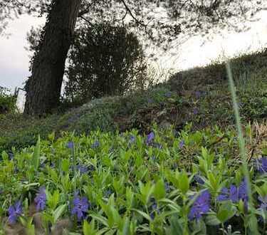 Uneinsehbare Gartenanlage mit Blick auf Neckarschleife