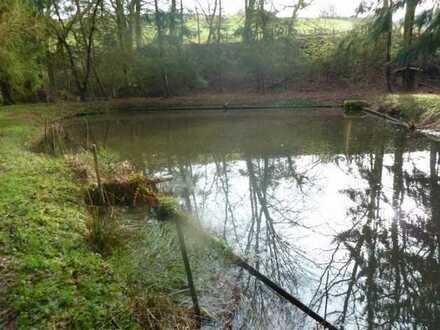 Teichanwesen mitten im Wald Südwestpfalz