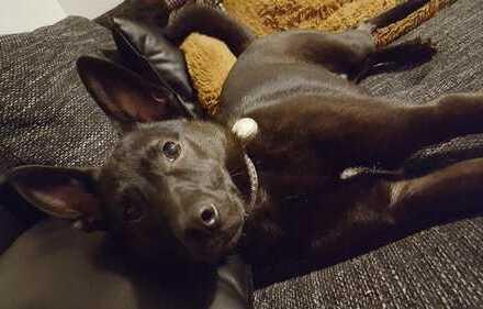Helles geräumiges Zimmer, Junges Pärchen mit kleinem Hund