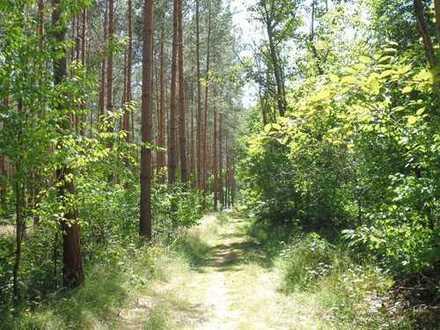 Dallgow-Döberitz: 12 Hektar Kiefernwald