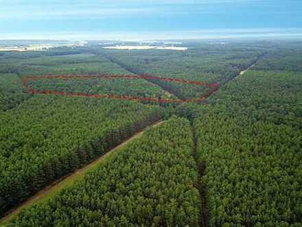 Nachverkauf: 13 ha Forstliegenschaft in der Niederlausitz