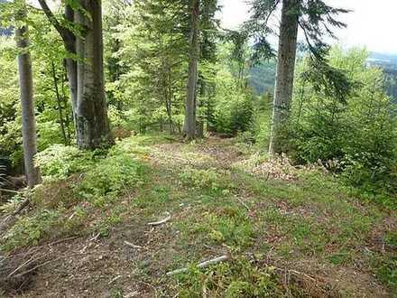 15 ha Fichten-/Mischwald im Allgäu, ca. 60 Jahre alt, schnellwüchsig, gut erschlossen