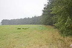 Vom Eigentümer wird ein faires Gegenangebot erwartet! Waldgrundstück mit 60 Jahre alten Baumbestand.