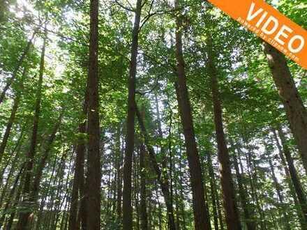 Waldgrundstück - Erleben Sie Natur pur - sichern Sie sich dieses Vogelparadies mitten am Reisberg