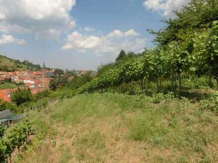 Kleines Weingartenparadies über St. Martin