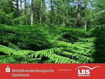 Bauen am alten Kiefernwald