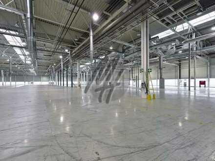 RAMPE + EBEN ✓ NÄHE BAB ✓ Moderne Lager-/Logistikflächen (15.000 m²) zu vermieten
