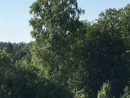 Mischwald - Buchen - und Kiefern-Buchenbestand