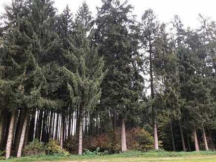 RARITÄT! Schöner Waldbestand in guter Bewirtschaftungslage!