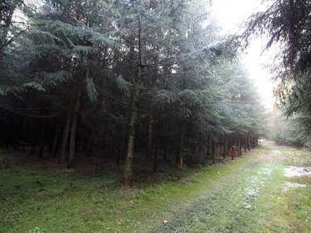 Großes, gut erschlossenes Waldgrundstück