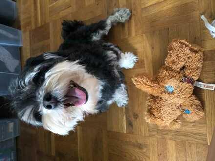 Helles Wg-Zimmer in 3er-Wg mit Hund
