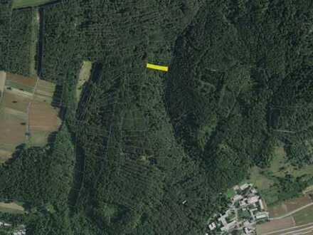 Waldfläche nahe der Schweizer Grenze