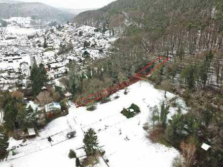 FRÜHJAHRS-AUKTION 2021: Kleine Waldfläche - nahe Wohnbebauung