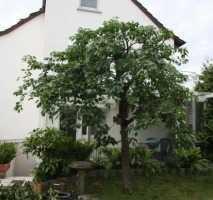 Zentral gelegene, renovierte 3-Zimmer-Wohnung mit Gartennutzung und Einbauküche in Griesheim