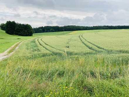 Landwirtschaftliche Fläche bei Kemmoden