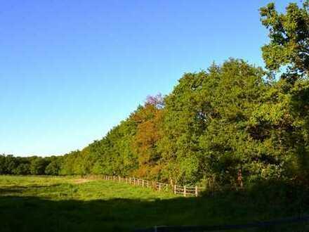 IMMOKONZEPT-NIEDERRHEIN: Große Waldfläche mit altem Eichenbestand, kleiner Weideanteil.....