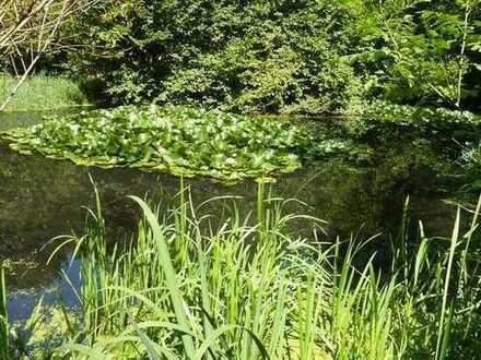 Eigene grüne Oase auf 4580 qm mit 3 angelegten Fischteichen und Wasserquelle.