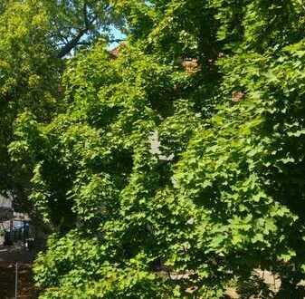 Attraktive 2-Zimmer-Wohnung in grüner Lage