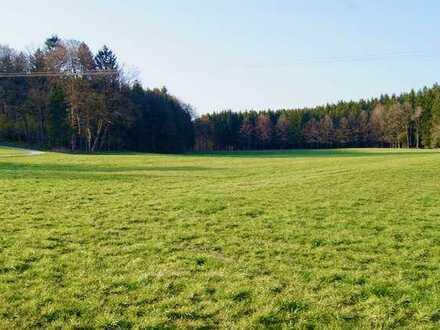 Ausgleichsfläche / Kapitalanlage / 4,2ha Grünland Wiese