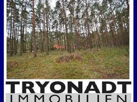 """""""Über 2,5 ha Wald mit Zugang zum Treptowsee!"""""""