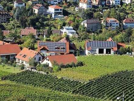 SOFORT Frei: Weingut mit Weinbergen und doch zentral: WG-Zimmer mit TV, Etagendusche/Wc, Gästeküche
