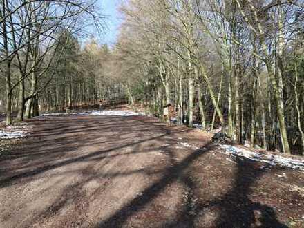 gute Zufahrt - pflegeleichter Baumbestand - sichere Geldanlage