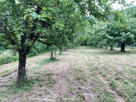 Gepflegtes Baumgrundstück im Gartenhausgebiet 2