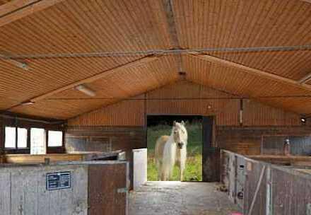 ***(Fast)ALLEINLAGE*** Alteingesessener Reiter-/Bauernhof mit Wohn- und Nebengebäuden