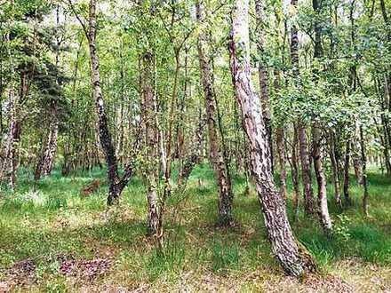 AUKTION: Waldgrundstück auf der Insel Hiddensee
